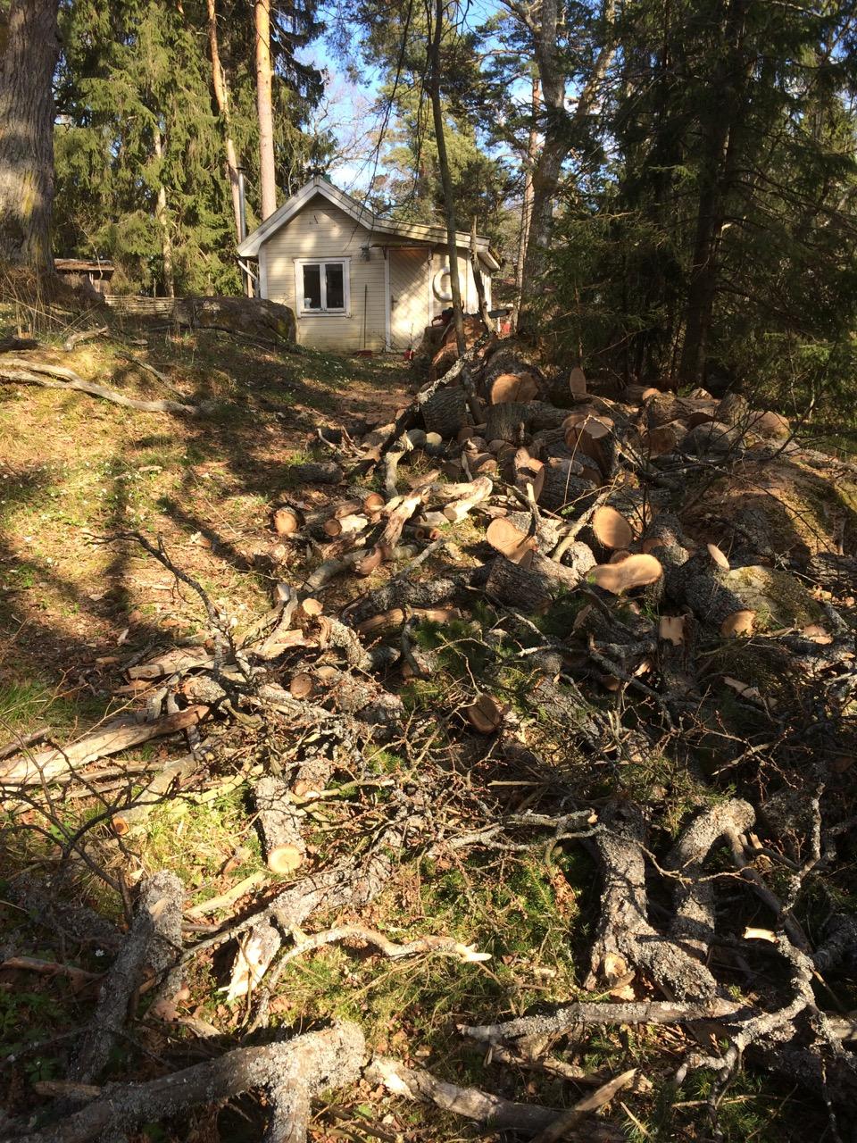Trädfällning i Uppsala - trädfällning Uppsala